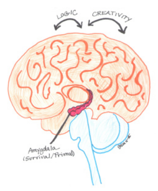 The primal brain — or amygdala